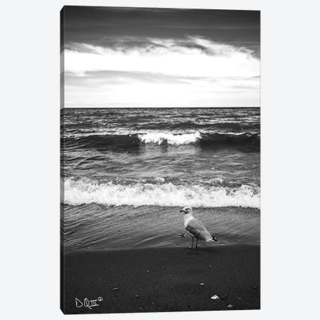Seagull II Canvas Print #DOQ8} by Donnie Quillen Canvas Print