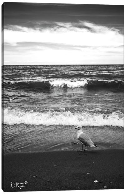 Seagull II Canvas Art Print
