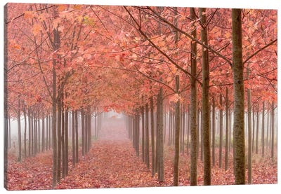 Misty Autumn Landscape, Willamette Valley, Oregon, USA Canvas Art Print