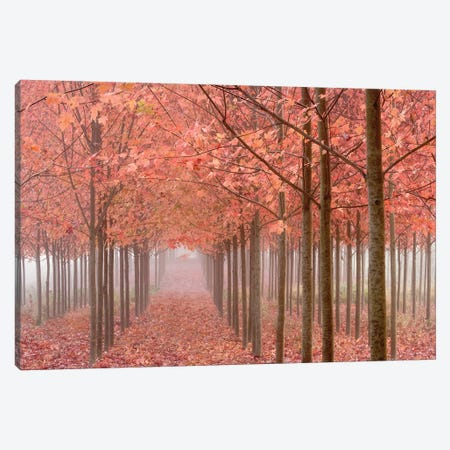 Misty Autumn Landscape, Willamette Valley, Oregon, USA Canvas Print #DPA10} by Don Paulson Canvas Art