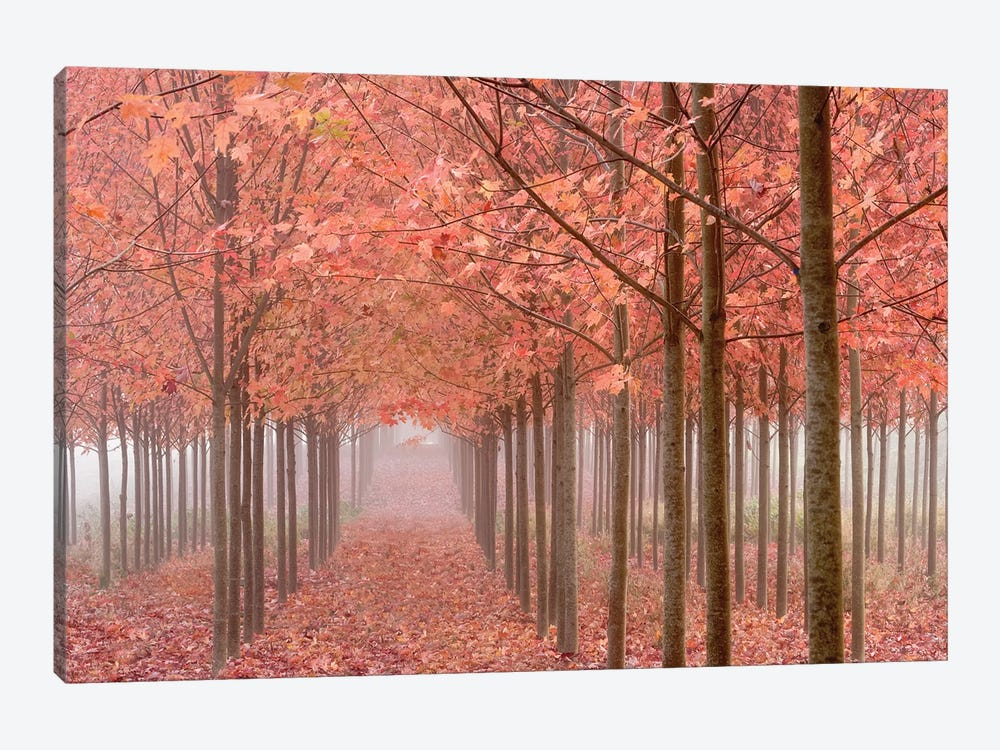 Misty Autumn Landscape, Willamette Valley, Oregon, USA by Don Paulson 1-piece Canvas Print