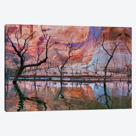 Dead Trees, Iceberg Canyon, Glen Canyon National Recreation Area, Utah, USA Canvas Print #DPA12} by Don Paulson Canvas Art