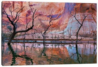 Dead Trees, Iceberg Canyon, Glen Canyon National Recreation Area, Utah, USA Canvas Art Print