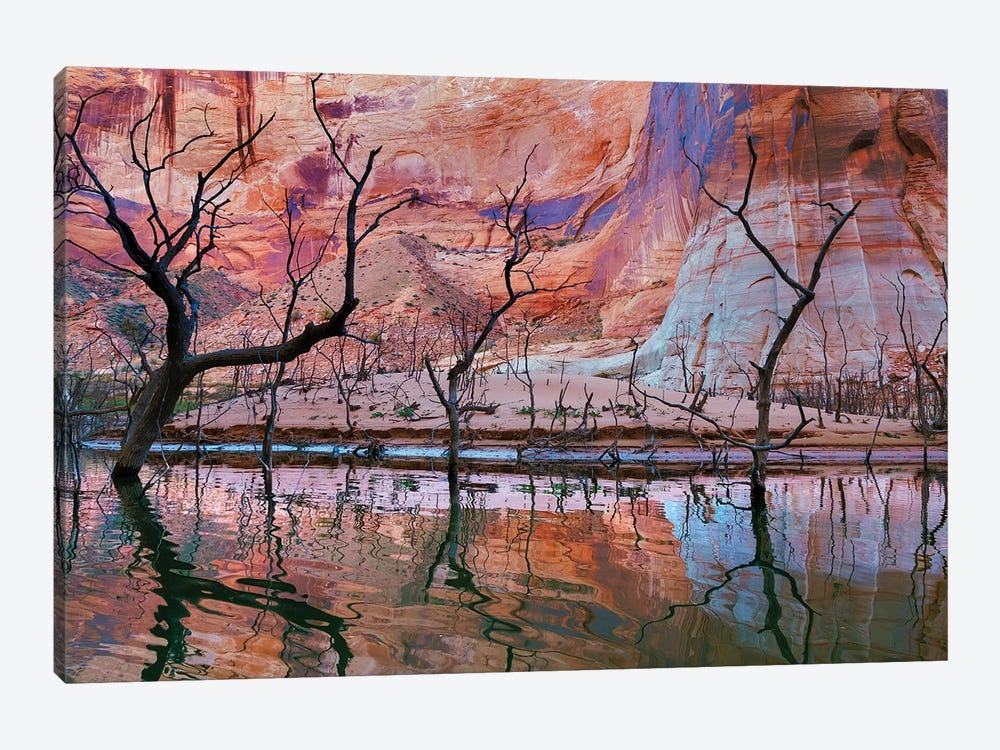 Dead Trees, Iceberg Canyon, Glen Canyon National Recreation Area, Utah, USA by Don Paulson 1-piece Canvas Art Print