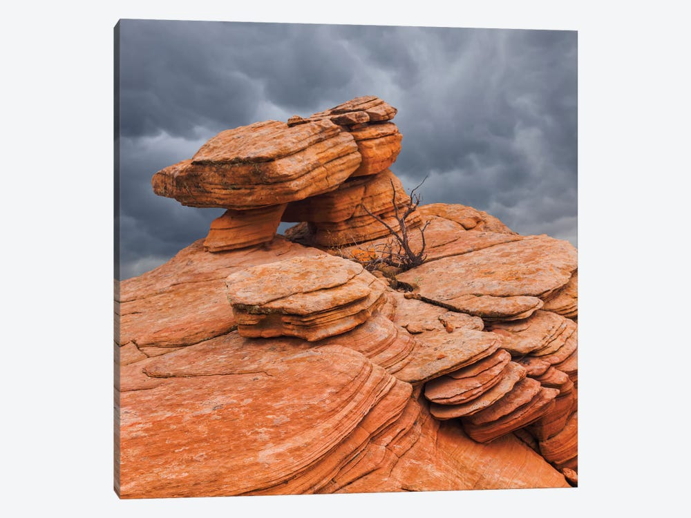 Sandstone Formations, Yant Flat, Utah, USA by Don Paulson 1-piece Canvas Art