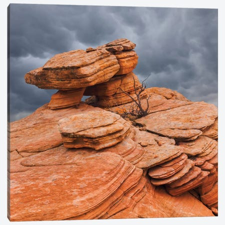 Sandstone Formations, Yant Flat, Utah, USA Canvas Print #DPA13} by Don Paulson Canvas Artwork
