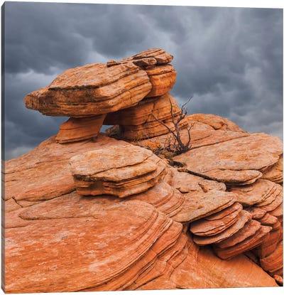 Sandstone Formations, Yant Flat, Utah, USA Canvas Art Print