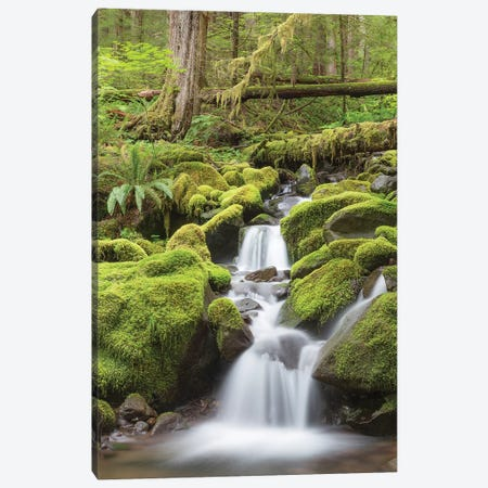Cascading Stream, Sol Duc River Valley, Olympic National Park, Washington, USA Canvas Print #DPA15} by Don Paulson Canvas Art Print