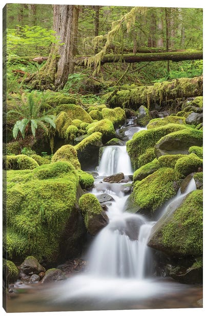 Cascading Stream, Sol Duc River Valley, Olympic National Park, Washington, USA Canvas Art Print