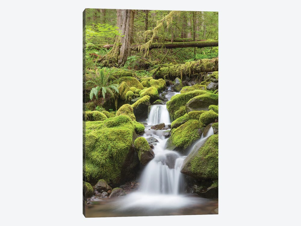 Cascading Stream, Sol Duc River Valley, Olympic National Park, Washington, USA by Don Paulson 1-piece Canvas Art