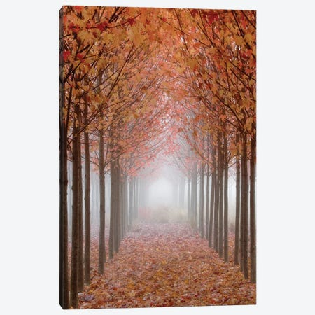 Foggy Leaf-Covered Walkway, Willamette Valley, Oregon, USA Canvas Print #DPA9} by Don Paulson Canvas Print