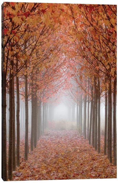 Foggy Leaf-Covered Walkway, Willamette Valley, Oregon, USA Canvas Art Print