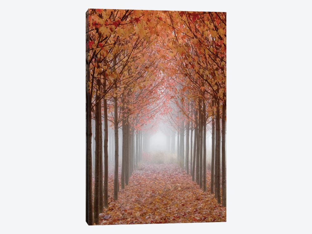 Foggy Leaf-Covered Walkway, Willamette Valley, Oregon, USA by Don Paulson 1-piece Canvas Artwork