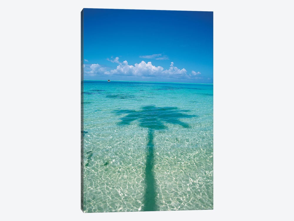 Palm Tree Shadow In The Ocean, French Polynesia by Douglas Peebles 1-piece Canvas Art