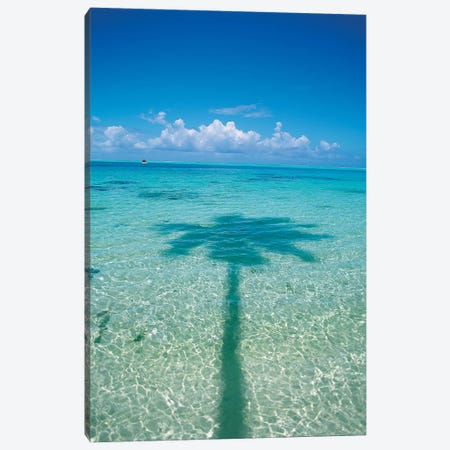 Palm Tree Shadow In The Ocean, French Polynesia Canvas Print #DPE1} by Douglas Peebles Canvas Art Print