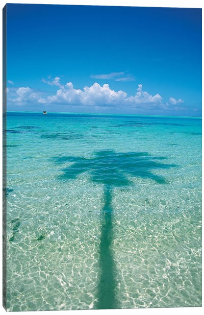 Palm Tree Shadow In The Ocean, French Polynesia Canvas Art Print