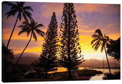 Cook Pines At Sunset, Kaneohe, Oahu, Hawai'i, USA Canvas Art Print