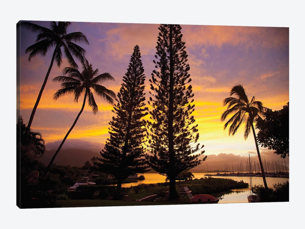 Cook Pines At Sunset, Kaneohe, Oahu, Hawai'i, USA 1-piece Canvas Print