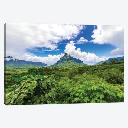 Belvedere Lookout, Cook's Bay, Opunohu Bay, Moorea, French Polynesia Canvas Print #DPE3} by Douglas Peebles Art Print