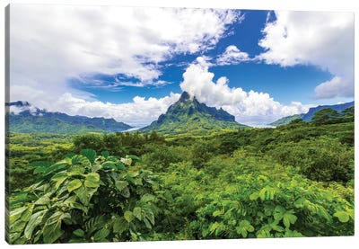 Belvedere Lookout, Cook's Bay, Opunohu Bay, Moorea, French Polynesia Canvas Art Print
