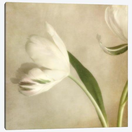 Ivory Blossom II Canvas Print #DPO10} by Dianne Poinski Canvas Artwork