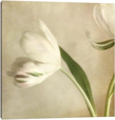 Ivory Blossom II Canvas Art Print