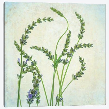 Lavender I 3-Piece Canvas #DPO11} by Dianne Poinski Canvas Art