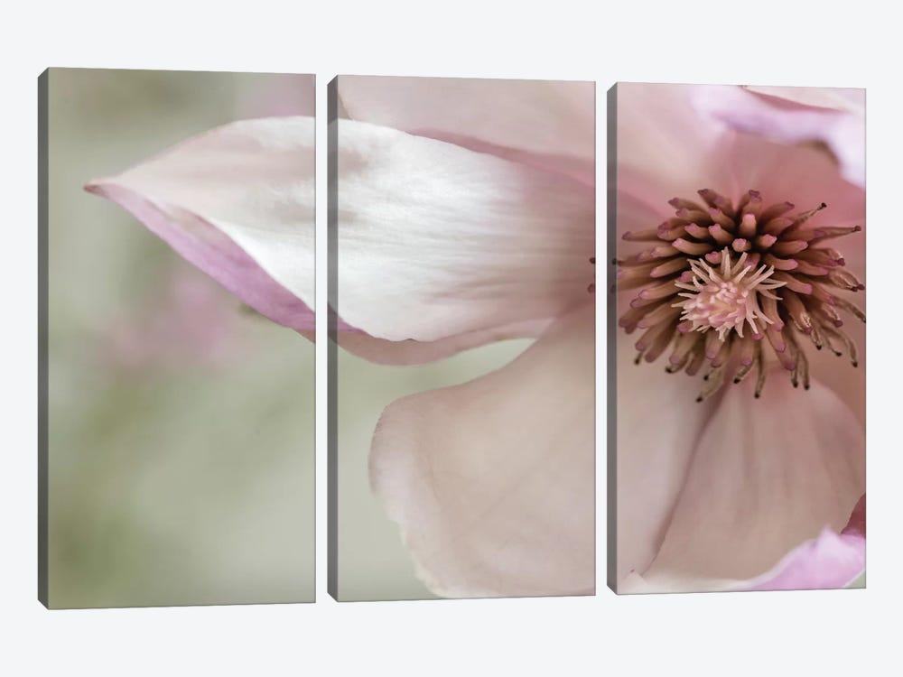 Pink Magnolia II by Dianne Poinski 3-piece Canvas Art Print