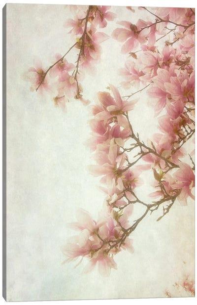 Pinker I Canvas Art Print