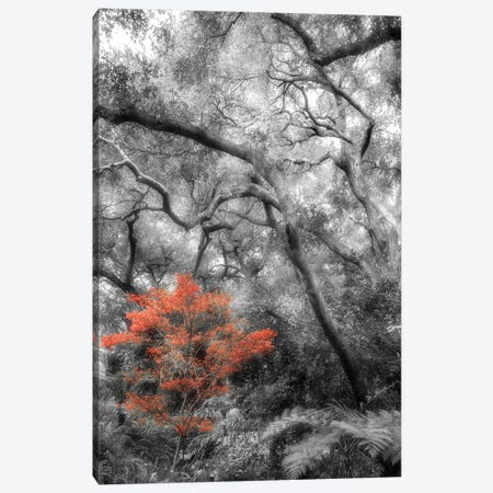 Splash in the Forest Canvas Print #DPO21} by Dianne Poinski Canvas Print