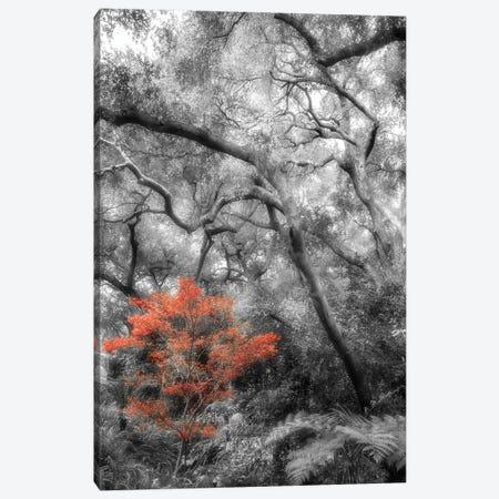 Splash in the Forest Canvas Print #DPO21} by Dianne Poinski Canvas Print