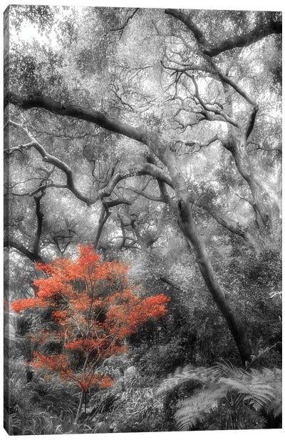 Splash in the Forest Canvas Art Print