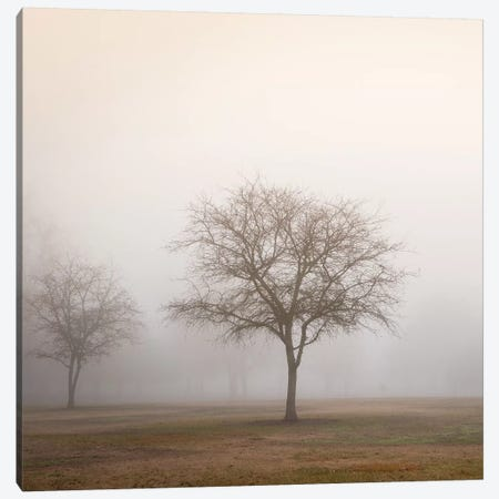 Trees in Fog II 3-Piece Canvas #DPO22} by Dianne Poinski Art Print