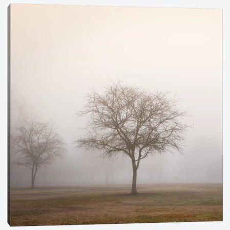 Trees in Fog II Canvas Print #DPO22} by Dianne Poinski Art Print