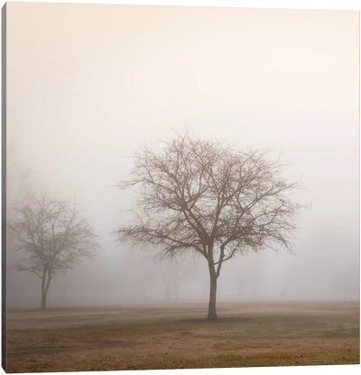 Trees in Fog II Canvas Art Print