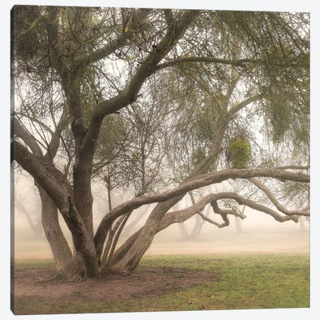 Trees in Fog III 3-Piece Canvas #DPO23} by Dianne Poinski Art Print