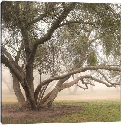 Trees in Fog III Canvas Art Print