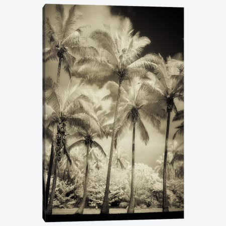 White Palms I Canvas Print #DPO28} by Dianne Poinski Canvas Print