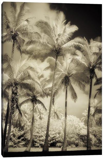 White Palms I Canvas Art Print