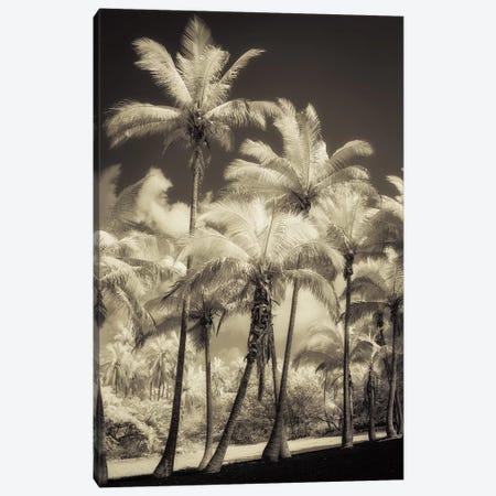 White Palms II Canvas Print #DPO29} by Dianne Poinski Art Print