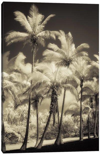 White Palms II Canvas Art Print