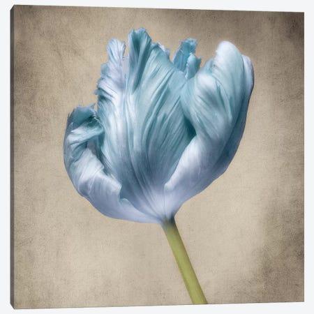 Aqua Tulip III Canvas Print #DPO2} by Dianne Poinski Canvas Art Print