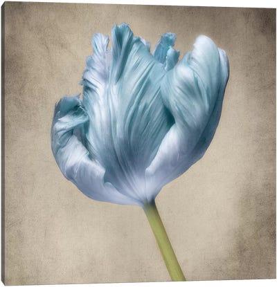 Aqua Tulip III Canvas Art Print