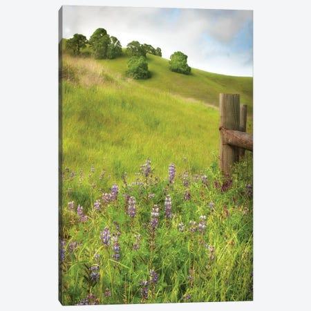 Wildflower Hill IV Canvas Print #DPO30} by Dianne Poinski Canvas Artwork