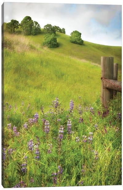 Wildflower Hill IV Canvas Art Print