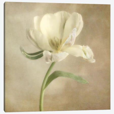 Ivory Blossom I Canvas Print #DPO9} by Dianne Poinski Canvas Art Print