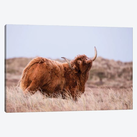 Highland Cow In Nature Canvas Print #DPT126} by MennoSchaefer Canvas Print