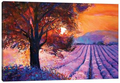 Lavender Fields I Canvas Art Print