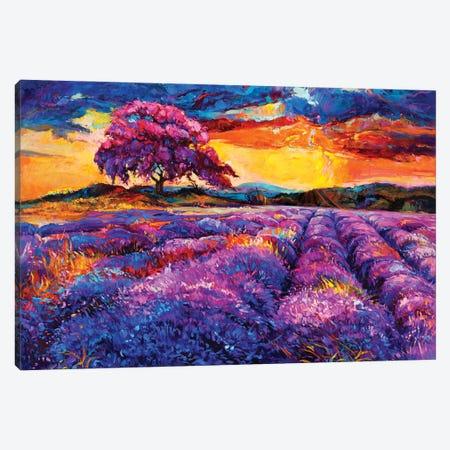 Lavender Fields II Canvas Print #DPT28} by borojoint Canvas Art