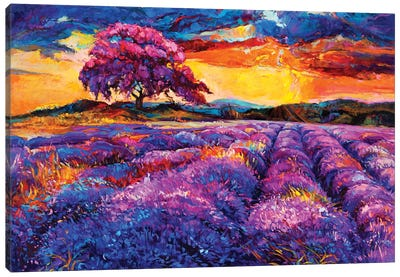 Lavender Fields II Canvas Art Print